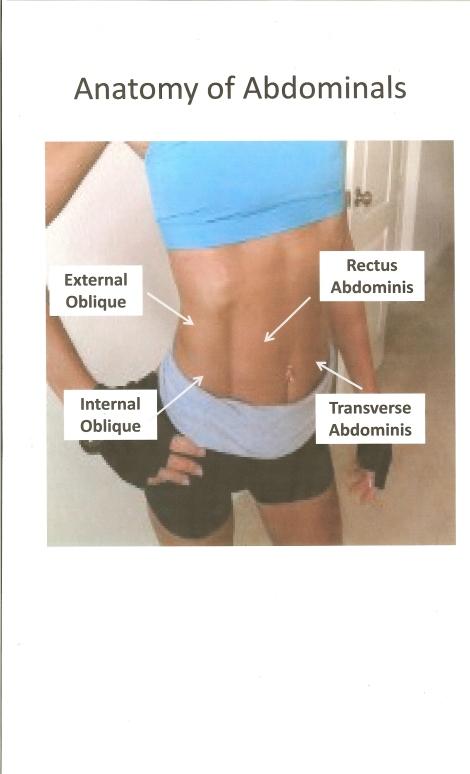 Anatomy of Abdominals - ShesLosingIt.net