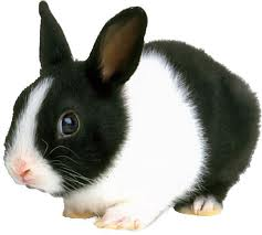 rabbitbreeders.us