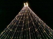 Tree at entrance