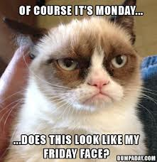 Grumpy Cat Monday
